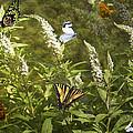 Butterflies In Golden Garden by Belinda Greb