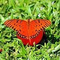 Butterflies by Jessica Christensen