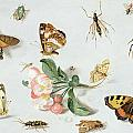 Butterflies Moths And Other Insects With A Sprig Of Apple Blossom by Jan Van Kessel