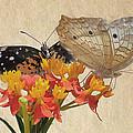 Butterflies Snd Flowers by Savannah Gibbs