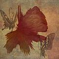Butterflower by Trish Tritz