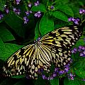 Butterfly - Yellow Green Purple by Mark Valentine