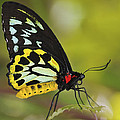 Butterfly 022 by Ingrid Smith-Johnsen