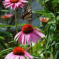 Butterfly 1 2013 by Edward Sobuta