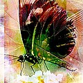 Butterfly 1 by Amanda Moore