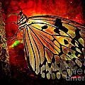 Butterfly 1 by Ben Yassa