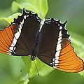 Butterfly 1 by Season Bonner