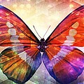 Butterfly 14-1 by Maria Urso