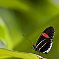 Butterfly 14 by Walter Herrit