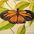 Butterfly 2 by Bonnie Schallermeir