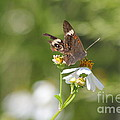 Butterfly  2 by Michelle Powell