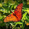 Butterfly 2 by Reid Callaway