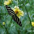 Butterfly 2 by Rich Priest