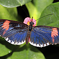 Key West Butterfly 3 by Bob Slitzan
