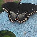 Butterfly 3 by Susan Hetrick