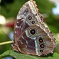 Butterfly 4 by Bob Slitzan