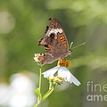 Butterfly  4 by Michelle Powell
