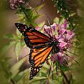 Butterfly 5 by Leticia Latocki