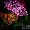 Butterfly 5 by Ronald Grogan