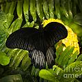 Butterfly 6 by Larry White