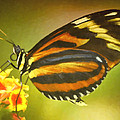 Butterfly 8 by Ingrid Smith-Johnsen