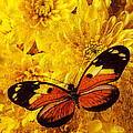 Butterfly Abstract by Garry Gay