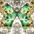 Butterfly Abstraction 6 by Devalyn Marshall