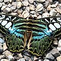 Butterfly Amongst Stones by Kaleidoscopik Photography