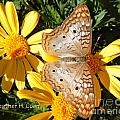 Butterfly And Daisies by Heather Coen