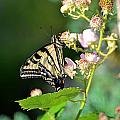 Butterfly And Flower. by Yuri Levchenko