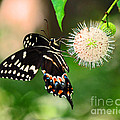 Butterfllies And The Crystal Balls by Davids Digits
