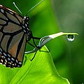 Butterfly And Water by Greg Patzer