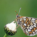 Butterfly And White Flower by Patrick Kessler