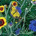 Butterfly And Wildflowers Spring Floral Garden Floral In Green And Yellow - Square Format Image by Walt Curlee