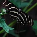 Butterfly Art 2 by Greg Patzer