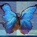 Butterfly Art - Dream It Do It - 99at3a by Variance Collections