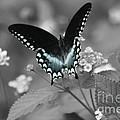 Butterfly Art by John W Smith III