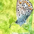 Butterfly Art Prints by Dori Marie Art By Design