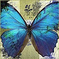Butterfly Art - S01bfr02 by Variance Collections