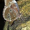 Butterfly At Night by MSVRVisual Rawshutterbug