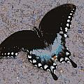 Butterfly At Rest by Laurie Pike