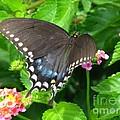 Butterfly Ballot by Greg Patzer