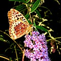 Butterfly Banquet 2 by Will Borden