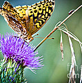 Butterfly Beauty And Little Friend by Cheryl Baxter