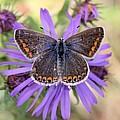 Butterfly Beauty by Doris Potter