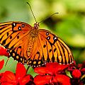 Butterfly Beauty by Teri Virbickis