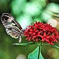 Butterfly by Bill Howard