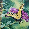 Butterfly Bush by Jill Ciccone Pike