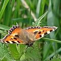 Butterfly by Carol Lynch