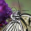 Butterfly Close Up  by Diane Greco-Lesser